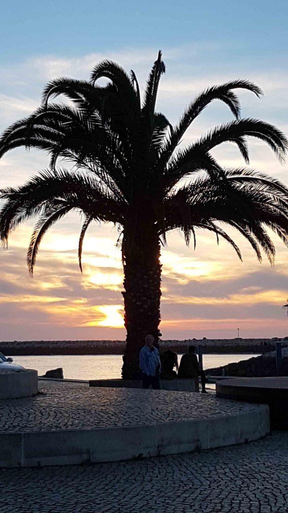 palmier vilamoura casa katz