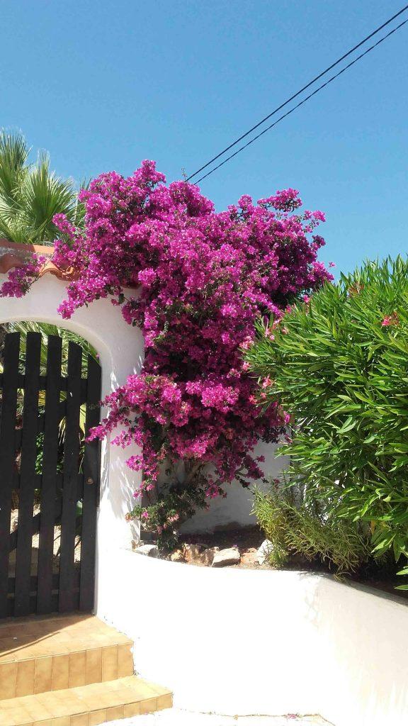 fleurs rue casa katz